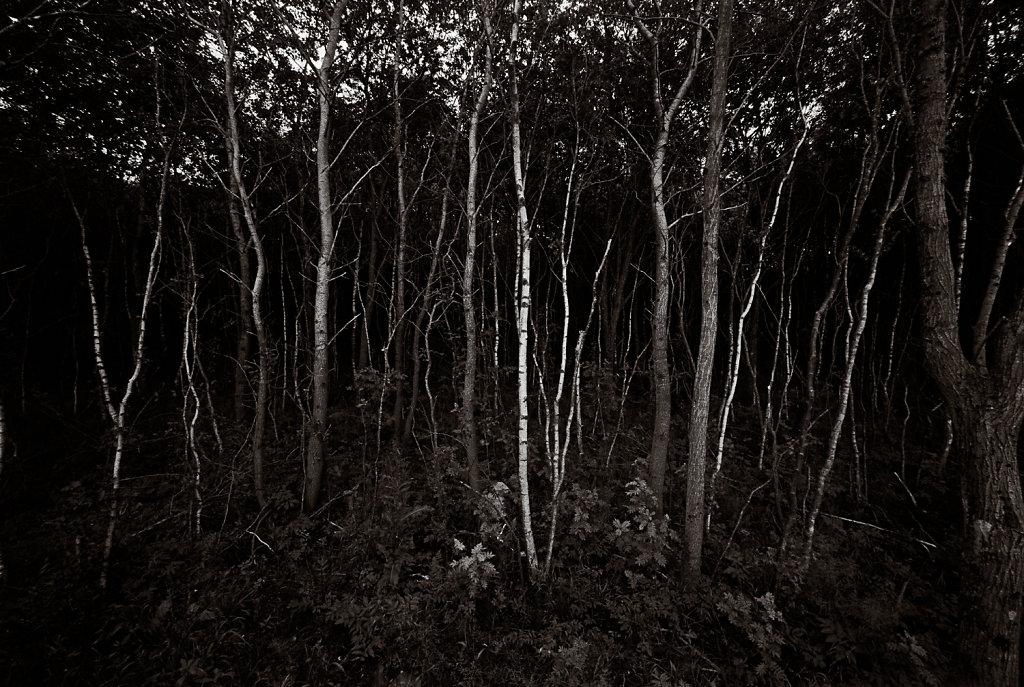 Træer i eftermiddagslys