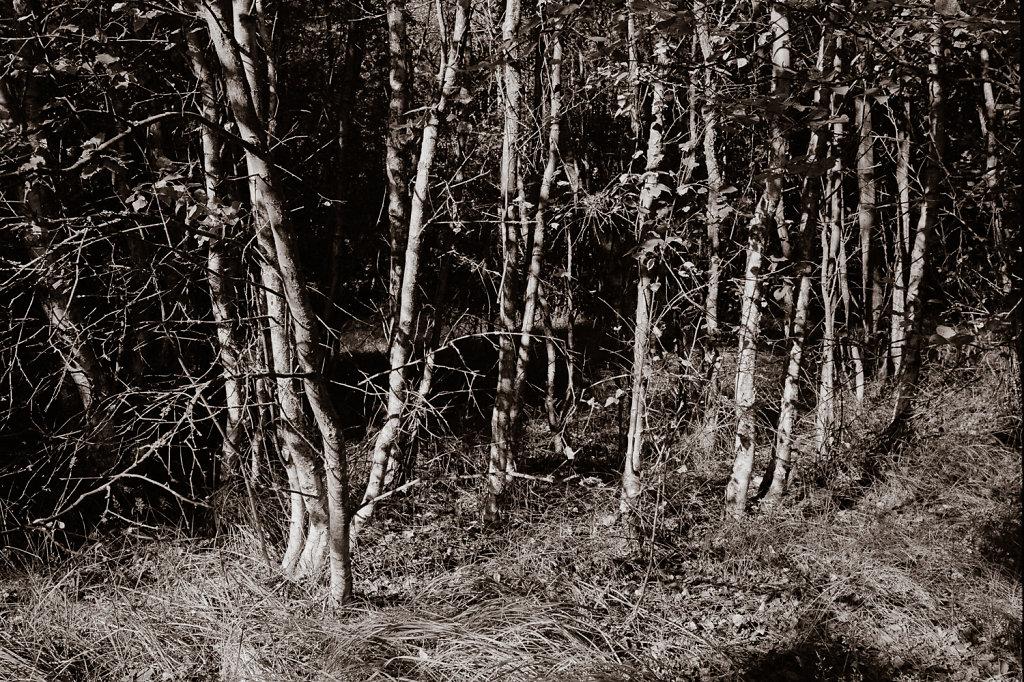 Tree study in Silvermax 1