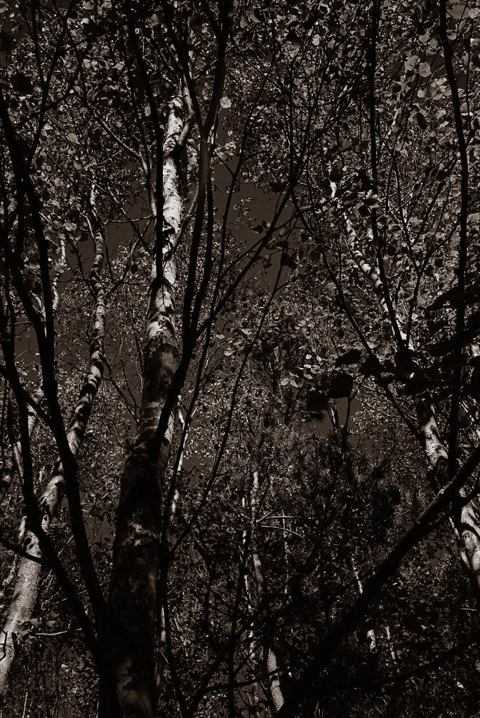 Tree study in Silvermax 2