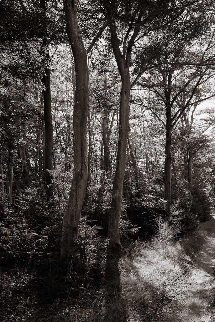 Tree study in Silvermax 5