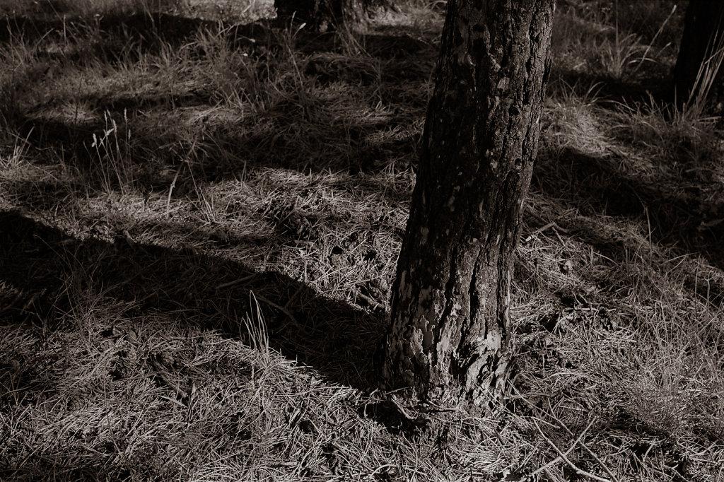 Tree study in Silvermax 6