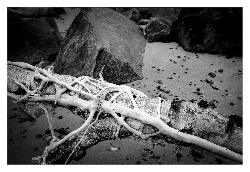 Drift wood - Gl Skagen